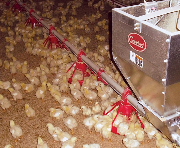 Poultry Feeding Systems-hero.jpg